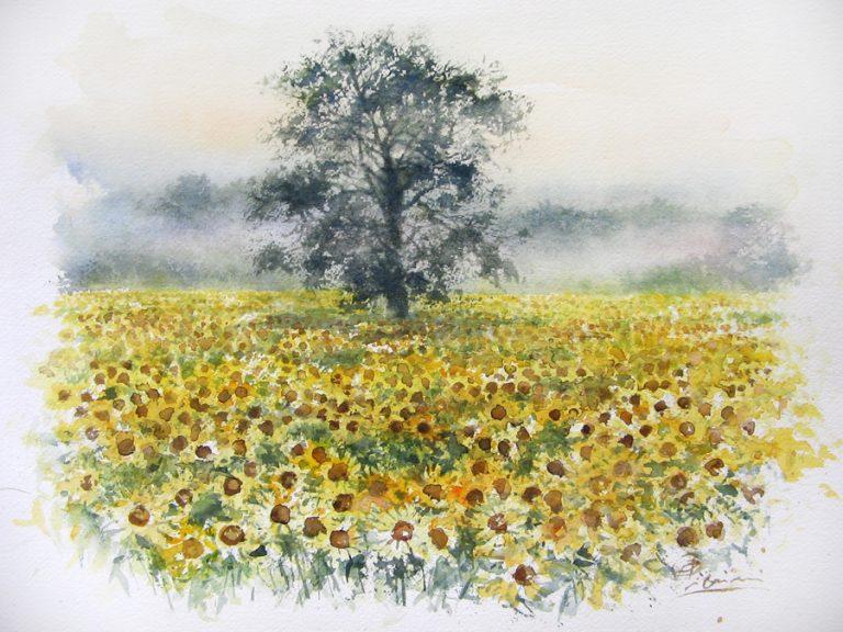 I paesaggi degli acquerelli di Giampiero Pierini, Mattutino campo di girasoli