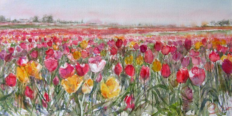 I paesaggi degli acquerelli di Giampiero Pierini, Distesa di tulipani