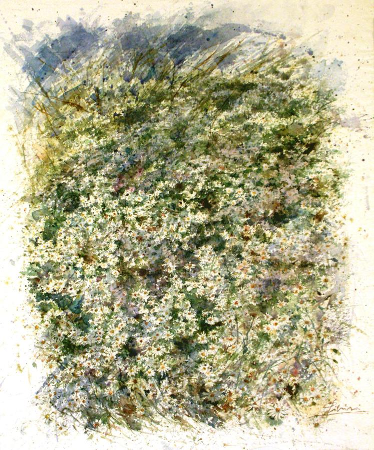 Le composizioni degli acquerelli di Giampiero Pierini, Cuscini di margherite