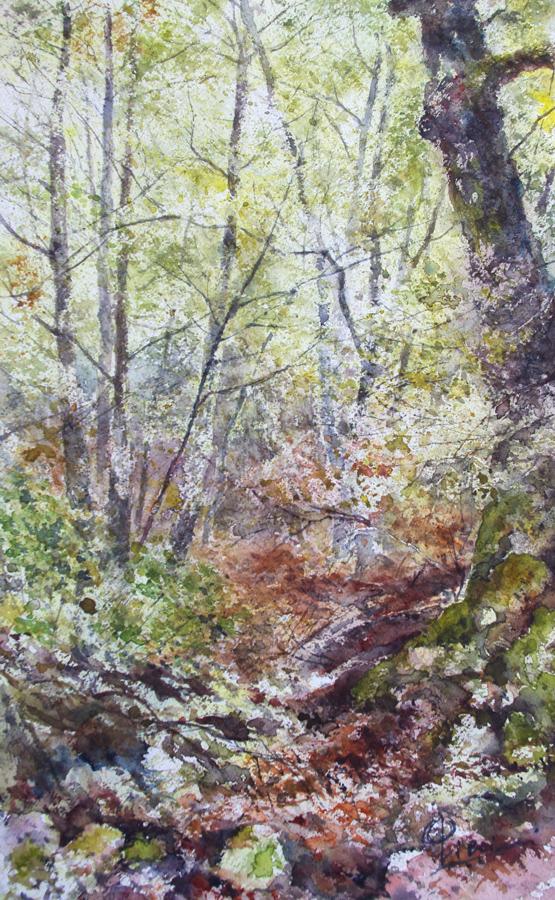 I paesaggi degli acquerelli di Giampiero Pierini, Il sottobosco