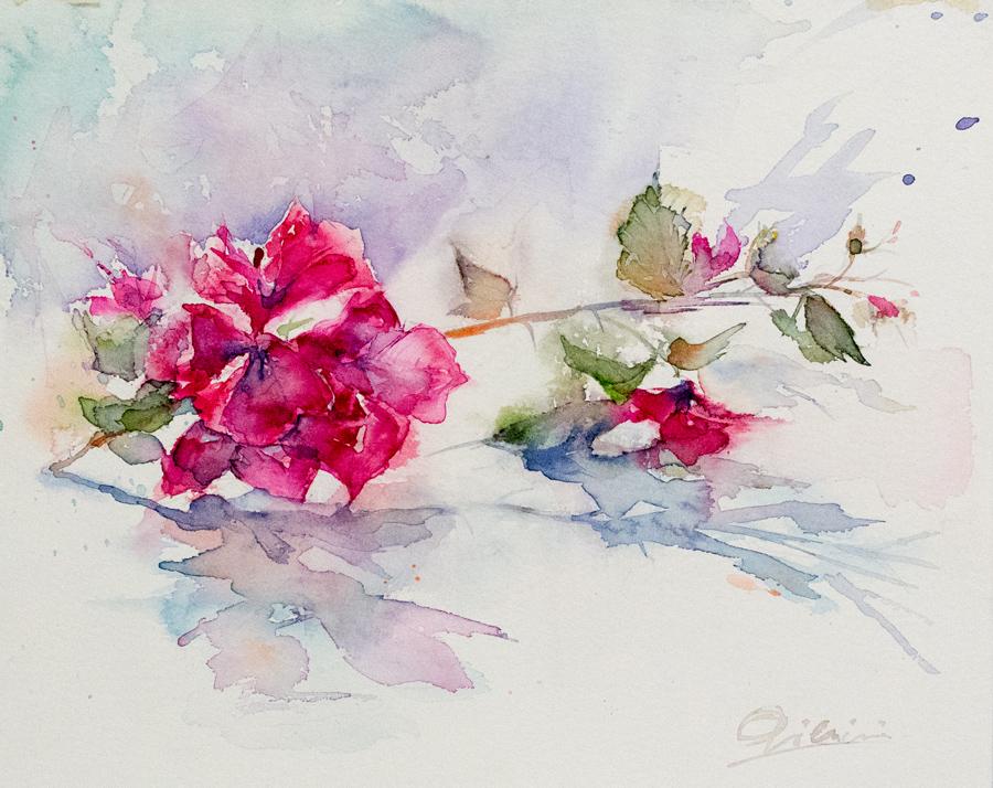 Le composizioni degli acquerelli di Giampiero Pierini, rosa rossa